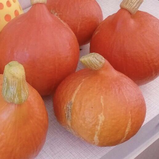 Farbenfrohe Suppe für dunkle Herbsttage