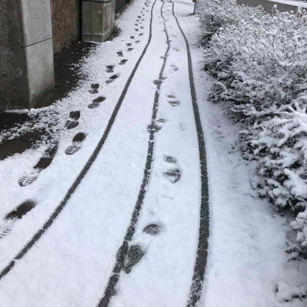Fährtenlesen im Schnee
