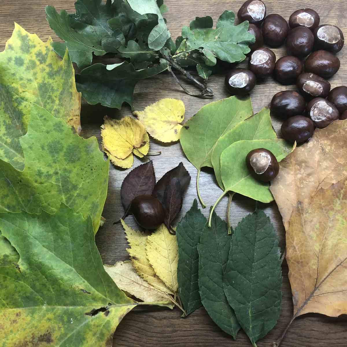 Anleitung Blätter schnell trocknen und pressen