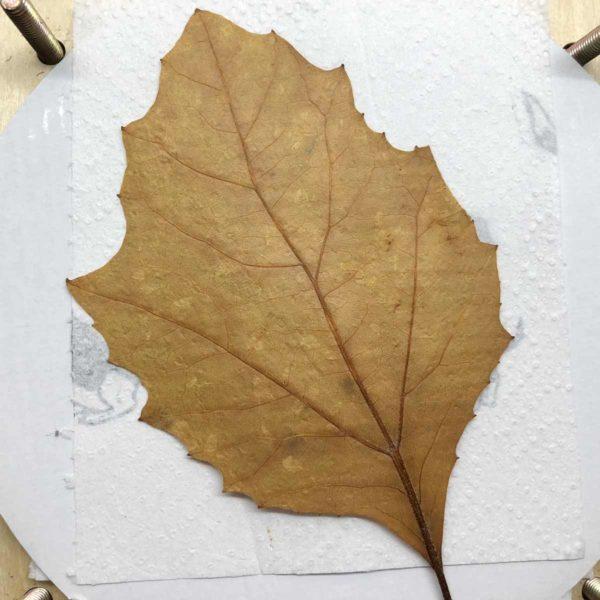 schnell getrocknete Blätter