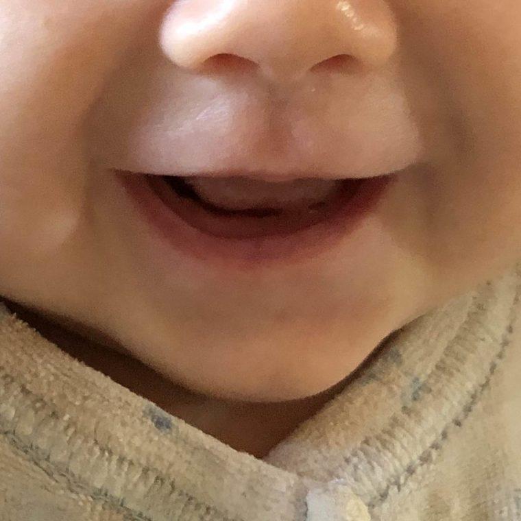 Die Königsraupe ist 3 Monate alt!
