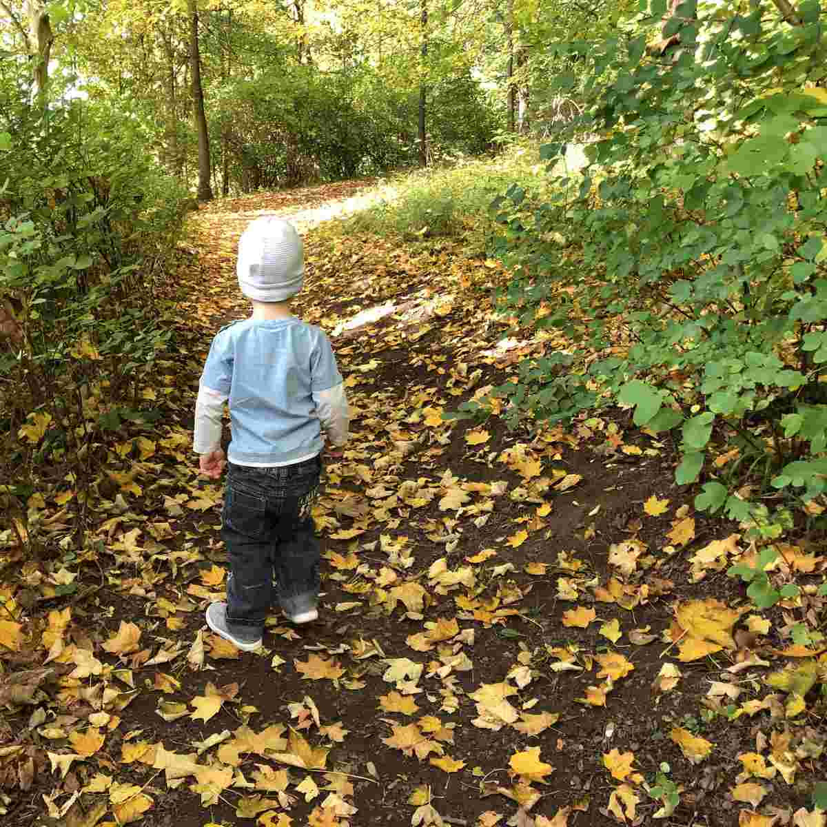 Wochenende in Bildern #WiB 41 2019 – Goldener Herbst